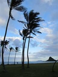 American Samoa -- Palm trees blowing
